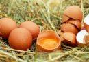Uova e formaggi contaminati: richiamati lotti per rischio microbiologico