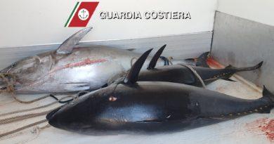Milazzo – Sequestrati 225 kg di tonno rosso