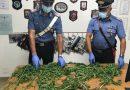 Librizzi: Scoperta una piantagione di canapa indiana. 42enne arrestato